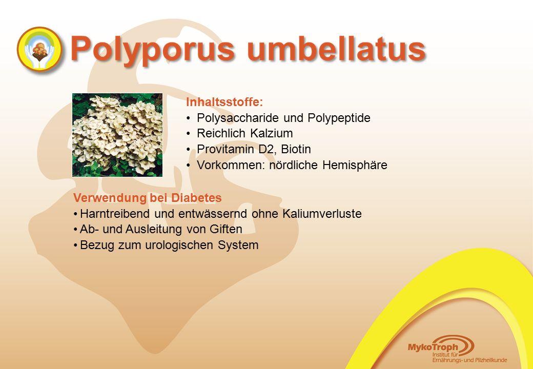 Verwendung bei Diabetes Harntreibend und entwässernd ohne Kaliumverluste Ab- und Ausleitung von Giften Bezug zum urologischen System Inhaltsstoffe: Po