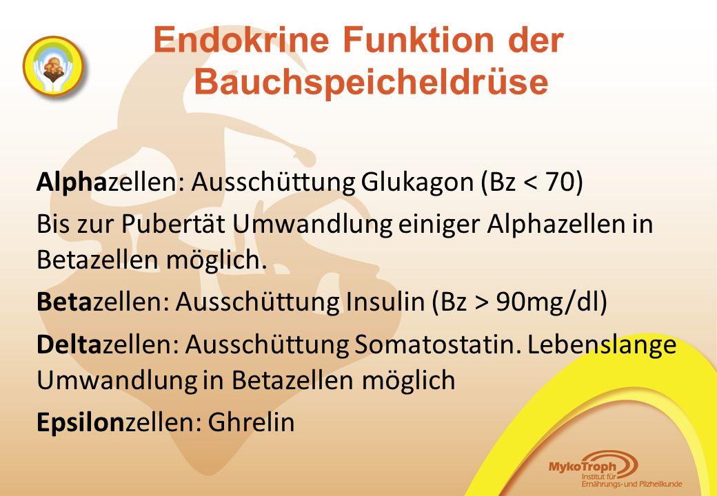 Endokrine Funktion der Bauchspeicheldrüse Alphazellen: Ausschüttung Glukagon (Bz < 70) Bis zur Pubertät Umwandlung einiger Alphazellen in Betazellen m