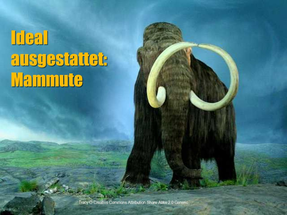 Tracy O Creative Commons Attribution-Share Alike 2.0 Generic Ideal ausgestattet: Mammute Ideal ausgestattet: Mammute