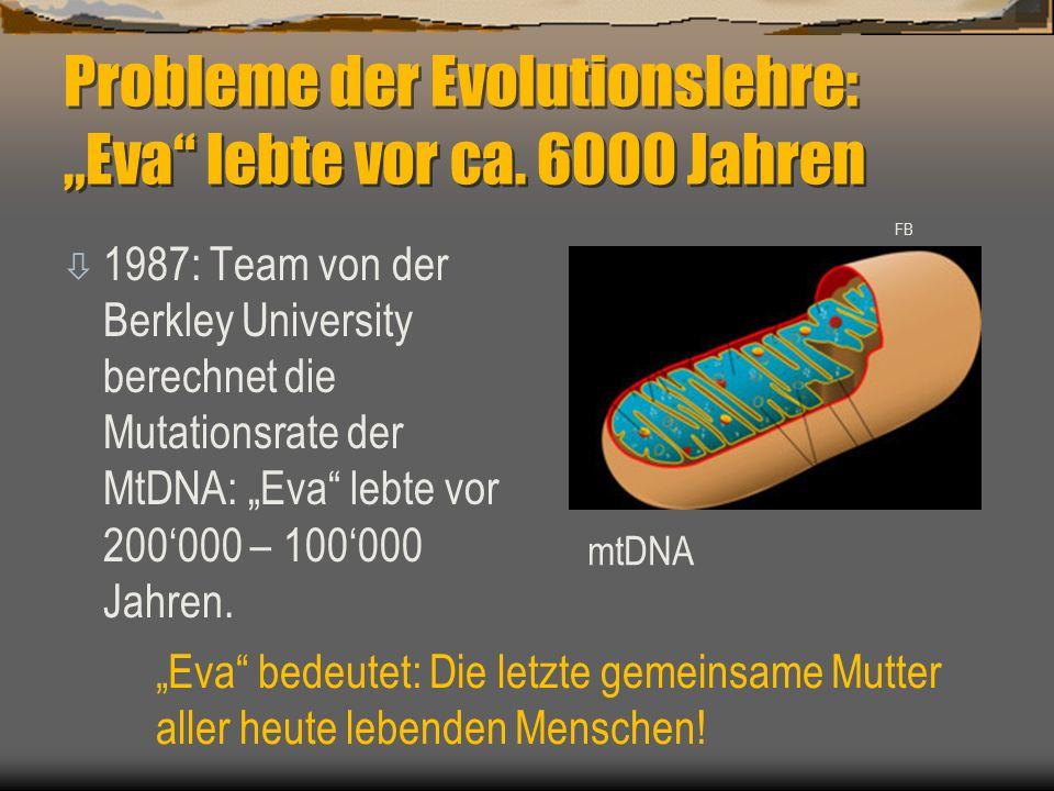 """Probleme der Evolutionslehre: """"Eva"""" lebte vor ca. 6000 Jahren ò 1987: Team von der Berkley University berechnet die Mutationsrate der MtDNA: """"Eva"""" leb"""