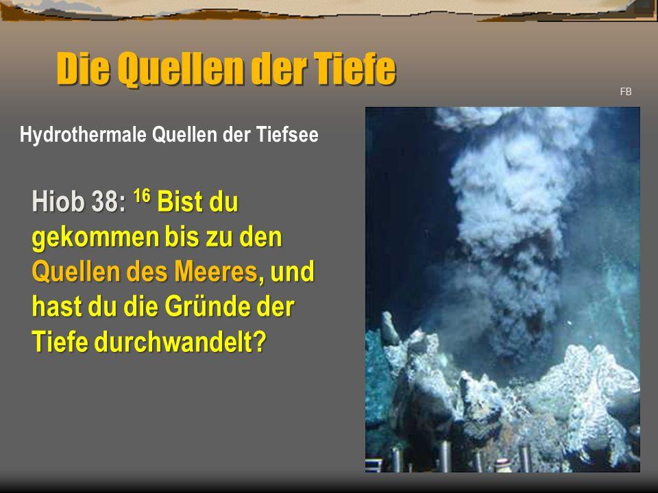 Die Quellen der Tiefe FB Hydrothermale Quellen der Tiefsee Hiob 38: 16 Bist du gekommen bis zu den Quellen des Meeres, und hast du die Gründe der Tiefe durchwandelt?