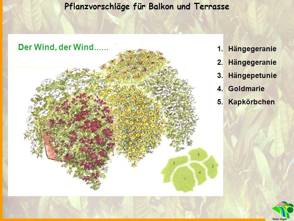 Der Wind, der Wind …… 1.Hängegeranie 2.Hängegeranie 3.Hängepetunie 4.Goldmarie 5.Kapkörbchen Pflanzvorschläge für Balkon und Terrasse