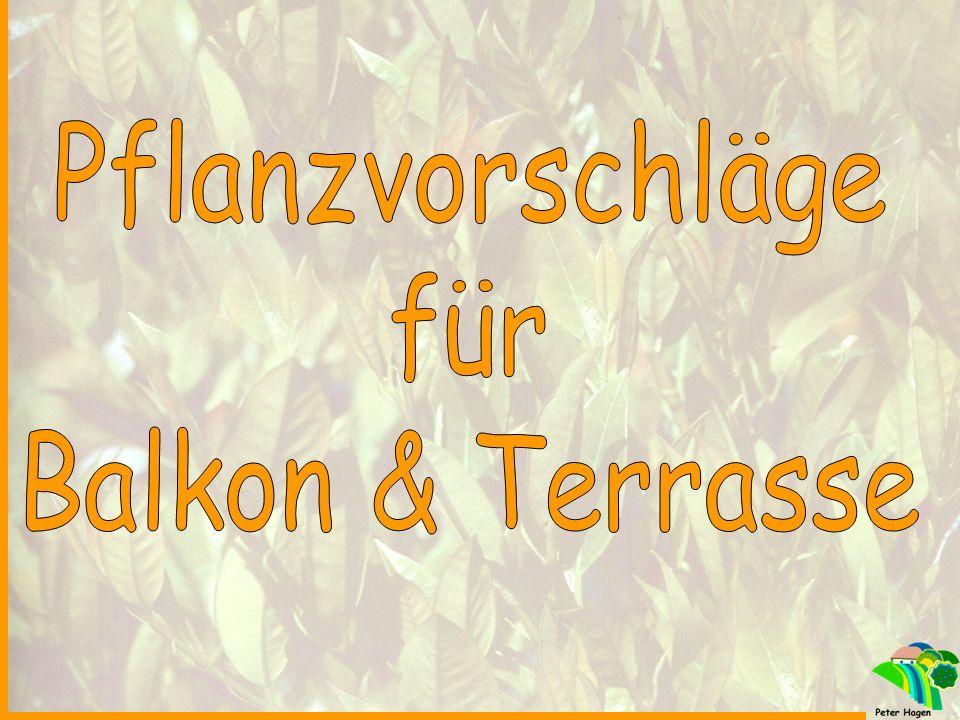 Regelmäßige Pflegemaßnahmen für Beet- & Balkonpflanzen .