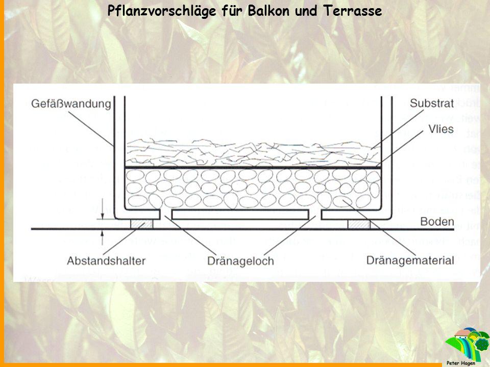 1.Geranie stehend 2.Lobularia maritina 3.Margeritte 4.Helichrysum 5.Salbei 6.Surfinia Pflanzvorschläge für Balkon und Terrasse