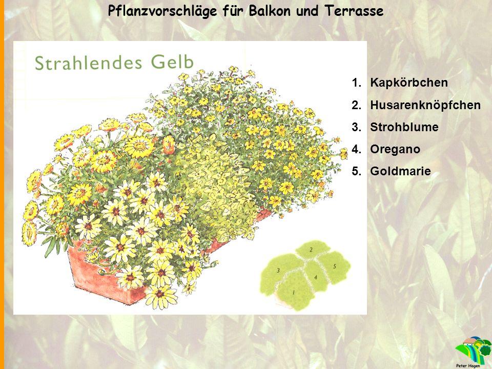1.Kapkörbchen 2.Husarenknöpfchen 3.Strohblume 4.Oregano 5.Goldmarie Pflanzvorschläge für Balkon und Terrasse