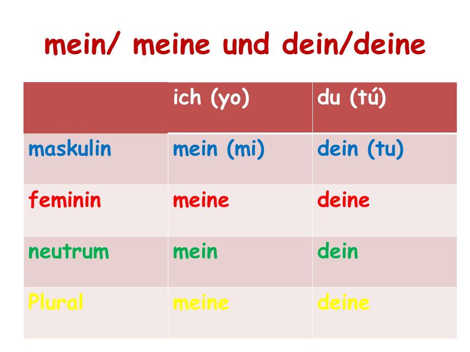 mein/ meine und dein/deine ich (yo)du (tú) maskulinmein (mi)dein (tu) femininmeinedeine neutrummeindein Pluralmeinedeine