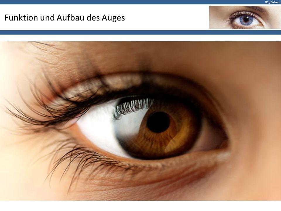 02 / Sehen Funktion und Aufbau des Auges