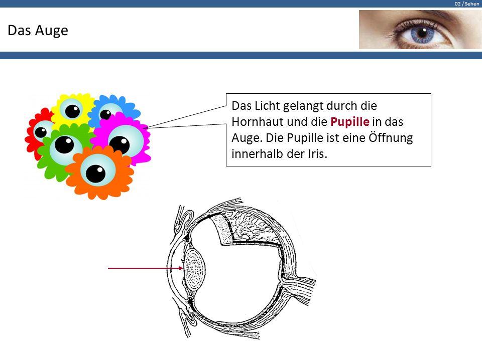 02 / Sehen Das Auge Das Licht gelangt durch die Hornhaut und die Pupille in das Auge. Die Pupille ist eine Öffnung innerhalb der Iris.