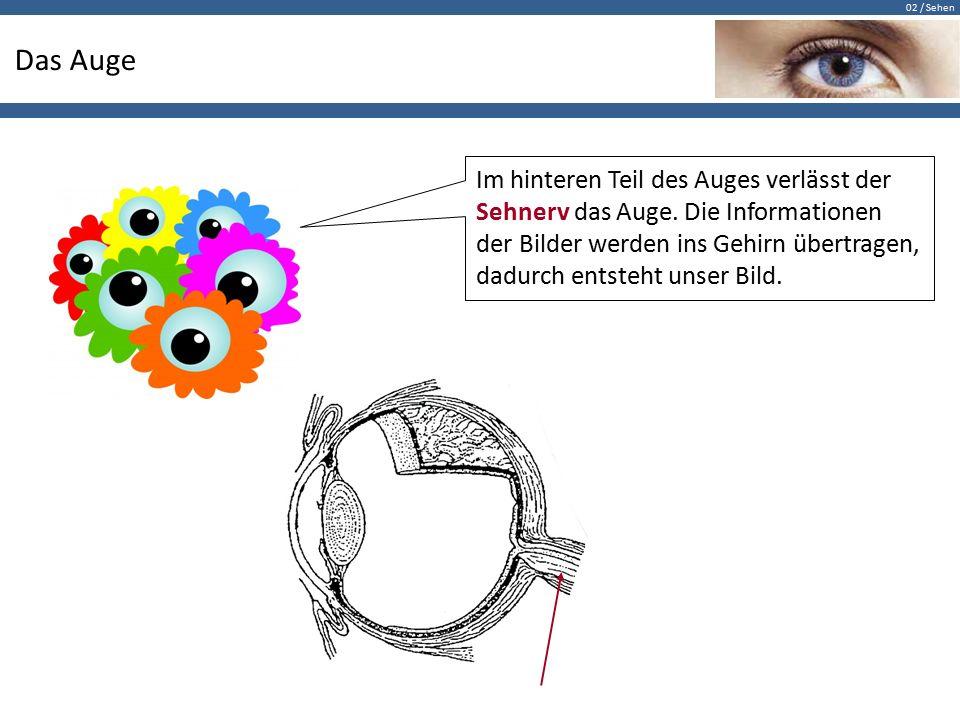 02 / Sehen Das Auge Im hinteren Teil des Auges verlässt der Sehnerv das Auge. Die Informationen der Bilder werden ins Gehirn übertragen, dadurch entst