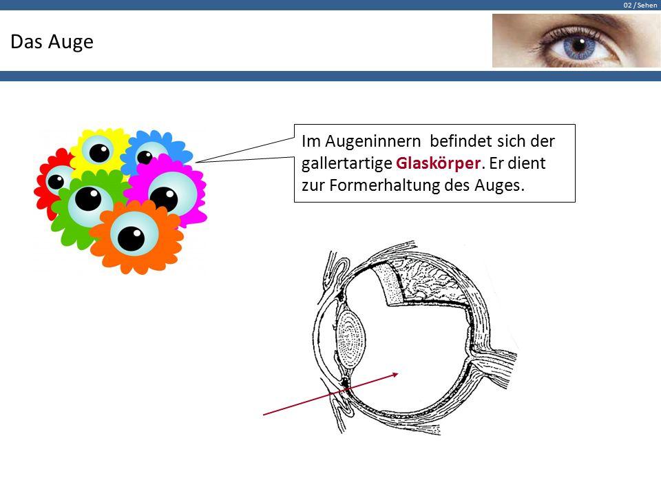 02 / Sehen Das Auge Im Augeninnern befindet sich der gallertartige Glaskörper. Er dient zur Formerhaltung des Auges.