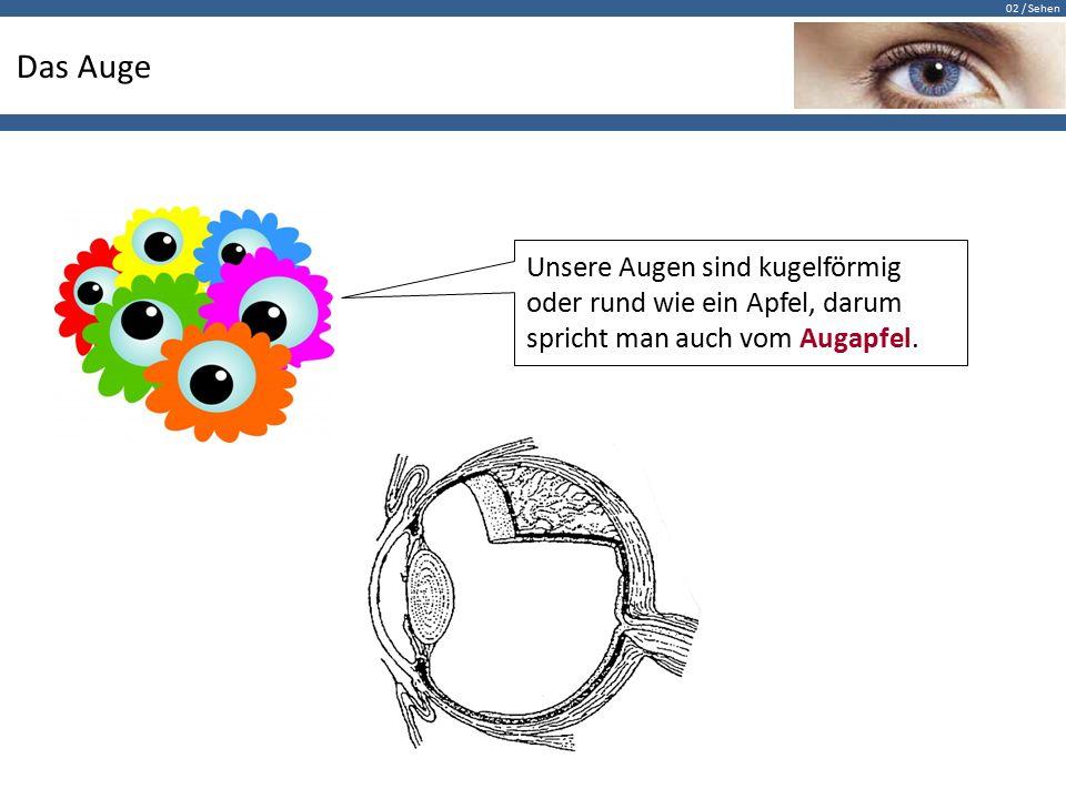 02 / Sehen Das Auge Unsere Augen sind kugelförmig oder rund wie ein Apfel, darum spricht man auch vom Augapfel.