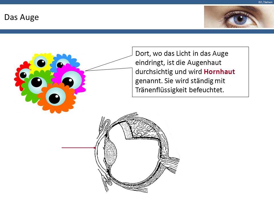 02 / Sehen Das Auge Dort, wo das Licht in das Auge eindringt, ist die Augenhaut durchsichtig und wird Hornhaut genannt. Sie wird ständig mit Tränenflü