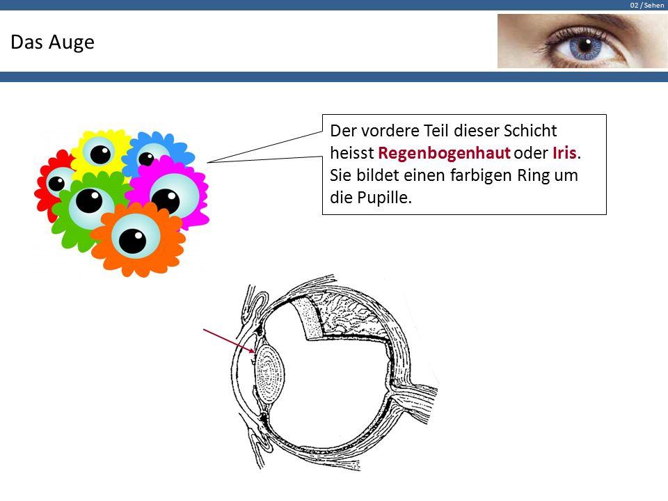 02 / Sehen Das Auge Der vordere Teil dieser Schicht heisst Regenbogenhaut oder Iris. Sie bildet einen farbigen Ring um die Pupille.