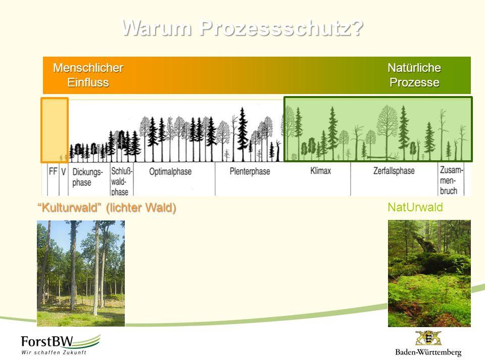 """Stilllegung Intensive Nutzung Naturnahe Waldwirtschaft Warum Prozessschutz? """"Kulturwald"""" (lichter Wald) NatUrwald Natürliche Prozesse Menschlicher Ein"""