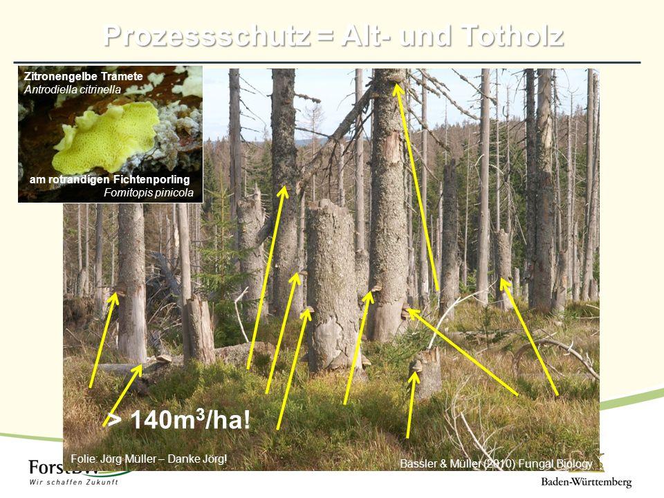 Bässler & Müller (2010) Fungal Biology > 140m 3 /ha! Folie: Jörg Müller – Danke Jörg! Zitronengelbe Tramete Antrodiella citrinella am rotrandigen Fich