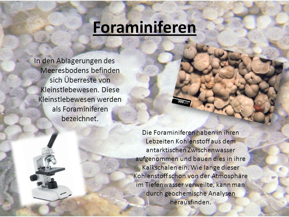 Foraminiferen In den Ablagerungen des Meeresbodens befinden sich Überreste von Kleinstlebewesen. Diese Kleinstlebewesen werden als Foraminiferen bezei