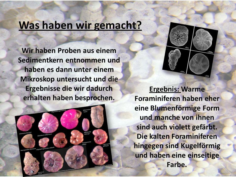 Wir haben Proben aus einem Sedimentkern entnommen und haben es dann unter einem Mikroskop untersucht und die Ergebnisse die wir dadurch erhalten haben besprochen.