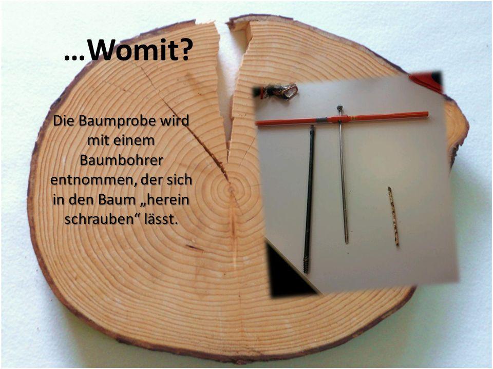 """…Womit? Die Baumprobe wird mit einem Baumbohrer entnommen, der sich in den Baum """"herein schrauben"""" lässt."""