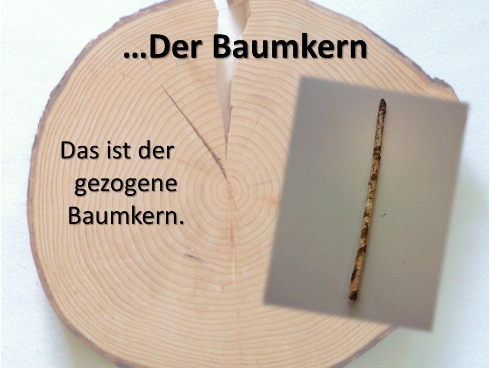 …Der Baumkern Das ist der gezogene Baumkern.