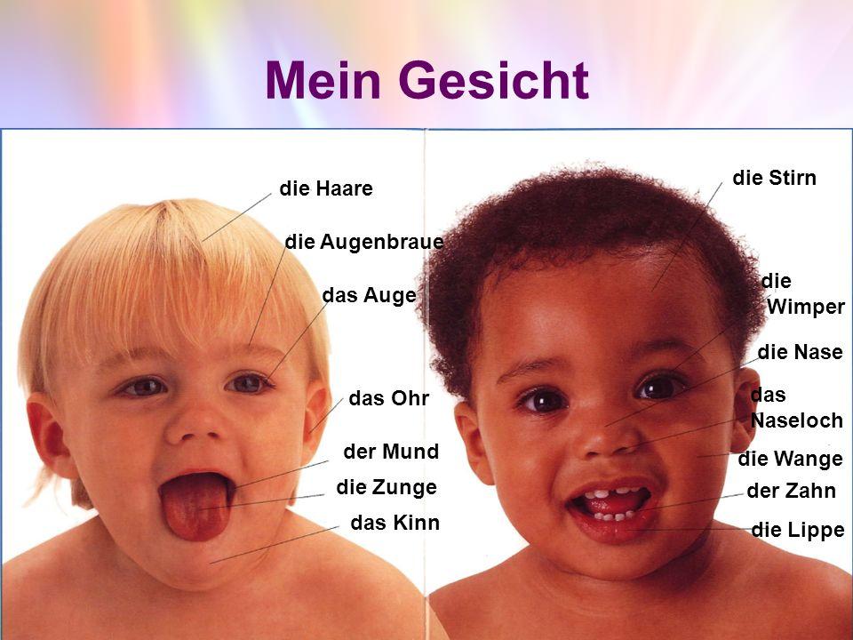 Das Gesicht - лицо die Haare – волос (die Haare ) die Augenbraue –бровь (die Augenbrauen) das Auge –глаз (die Augen) das Ohr - ухо (die Ohren) der Mund – рот (die Münder) die Zunge - язык (die Zungen) das Kinn- подбородок (die Kinne) die Stirn – лоб (die Stirnen ) die Wimper – ресница (die Wimpern ) die Nase –нос (die Nasen) das Naseloch – ноздря (die Naselöcher) die Wange – щека (die Wangen) der Zahn – зуб (die Zähne) die Lippe – губа (die Lippen )