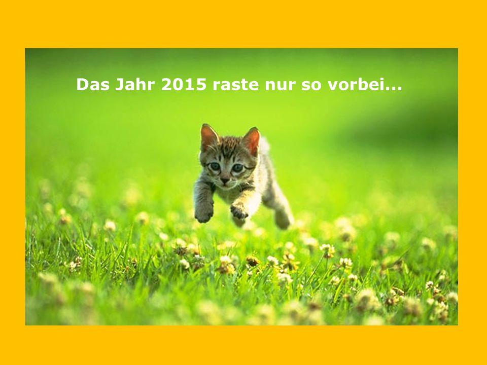 Das Jahr 2015 raste nur so vorbei...