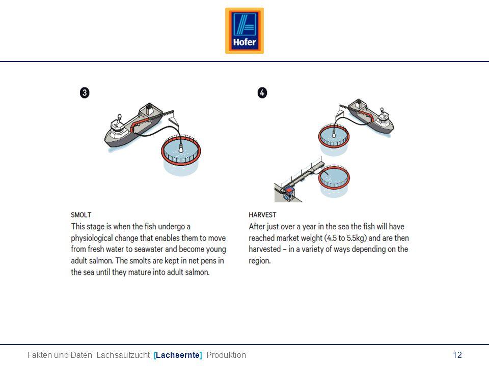 12 Lachs Fakten und Daten Lachsaufzucht [Lachsernte] Produktion