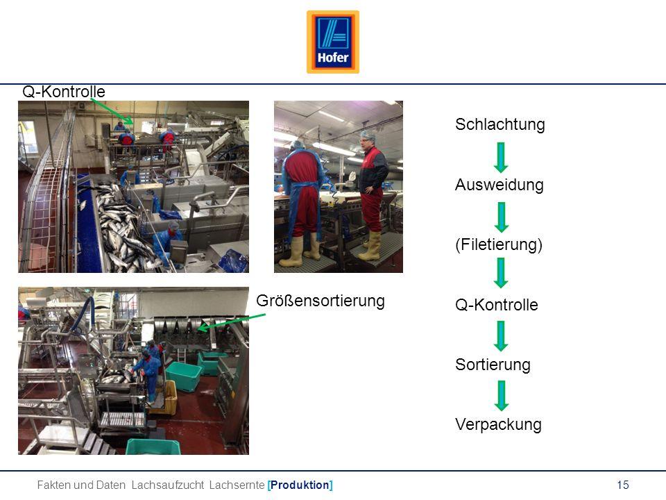 15 Fakten und Daten Lachsaufzucht Lachsernte [Produktion] Q-Kontrolle Größensortierung Schlachtung Ausweidung (Filetierung) Q-Kontrolle Sortierung Verpackung
