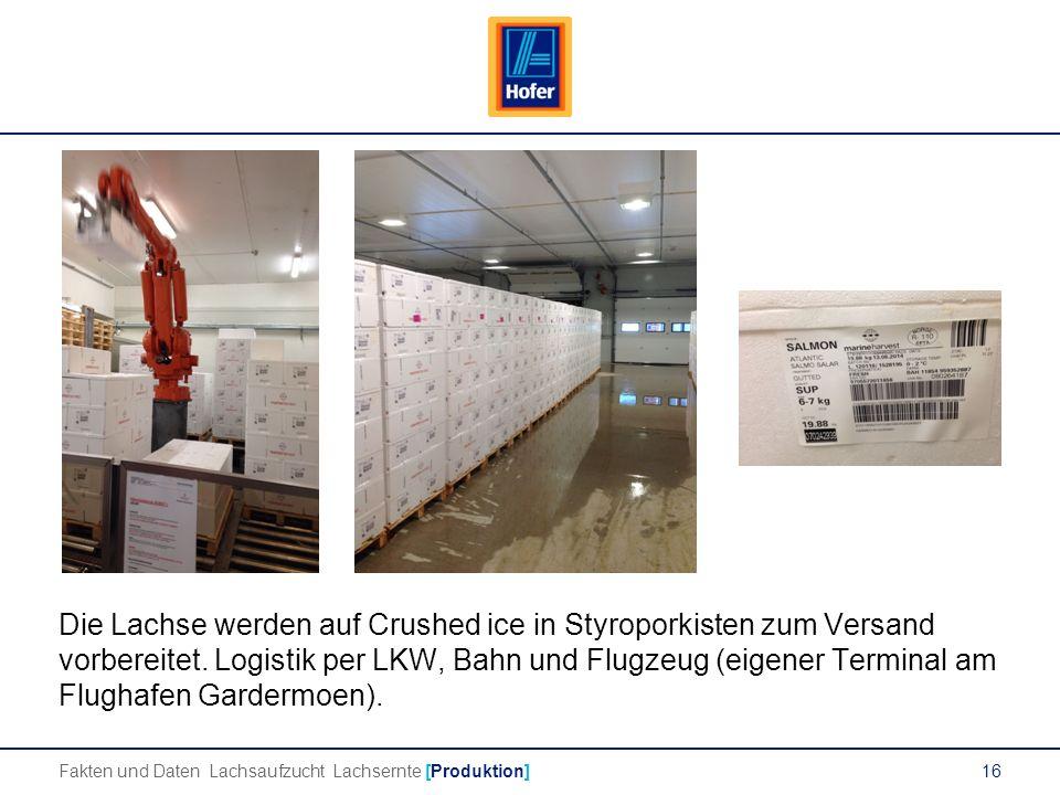 16 Die Lachse werden auf Crushed ice in Styroporkisten zum Versand vorbereitet.