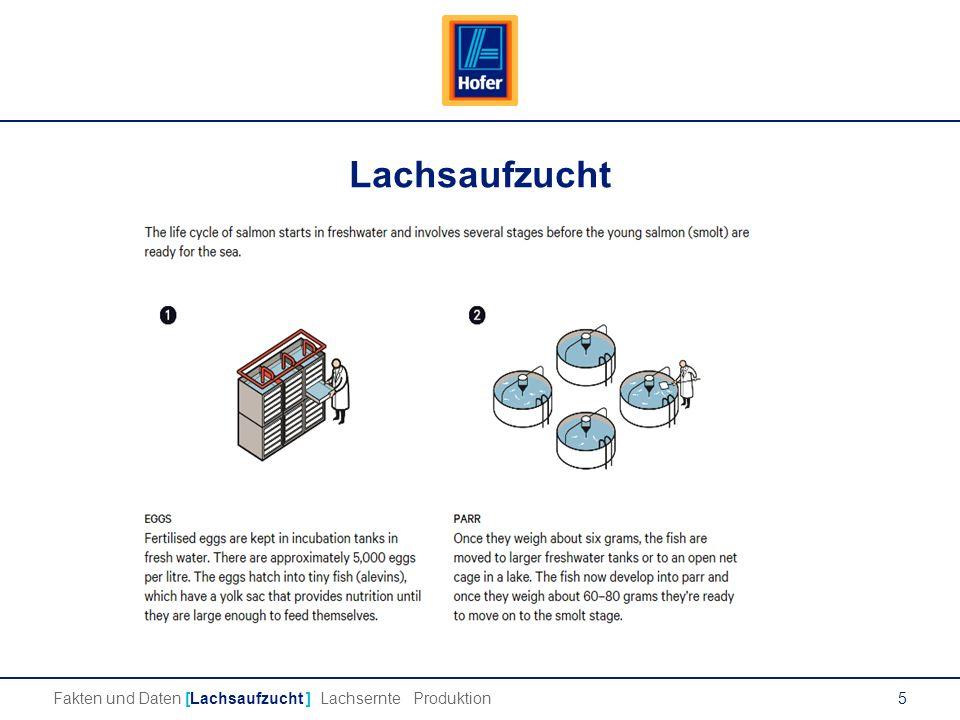 5 Lachsaufzucht Fakten und Daten [Lachsaufzucht ] Lachsernte Produktion