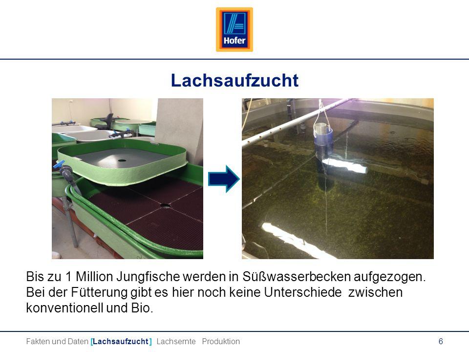 6 Lachsaufzucht Bis zu 1 Million Jungfische werden in Süßwasserbecken aufgezogen.