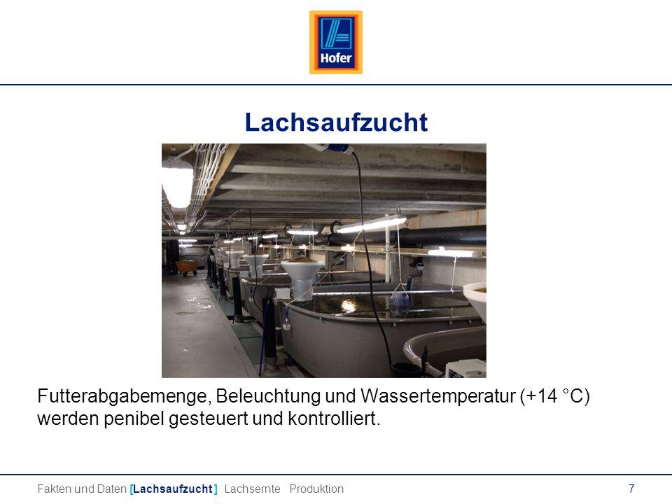 7 Lachsaufzucht Futterabgabemenge, Beleuchtung und Wassertemperatur (+14 °C) werden penibel gesteuert und kontrolliert.