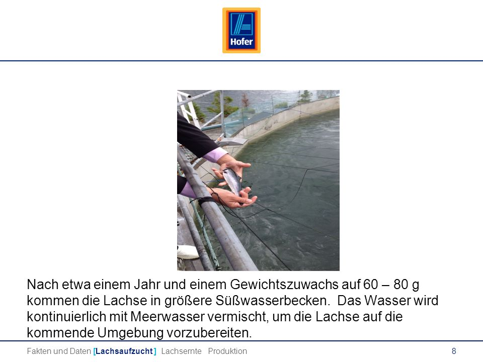 8 Lachs Nach etwa einem Jahr und einem Gewichtszuwachs auf 60 – 80 g kommen die Lachse in größere Süßwasserbecken.