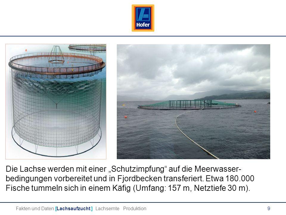 """9 Die Lachse werden mit einer """"Schutzimpfung auf die Meerwasser- bedingungen vorbereitet und in Fjordbecken transferiert."""
