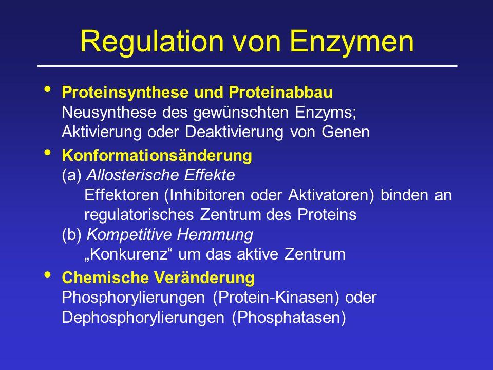 """Regulation von Enzymen Proteinsynthese und Proteinabbau Neusynthese des gewünschten Enzyms; Aktivierung oder Deaktivierung von Genen Konformationsänderung (a) Allosterische Effekte Effektoren (Inhibitoren oder Aktivatoren) binden an regulatorisches Zentrum des Proteins (b) Kompetitive Hemmung """"Konkurenz um das aktive Zentrum Chemische Veränderung Phosphorylierungen (Protein-Kinasen) oder Dephosphorylierungen (Phosphatasen)"""