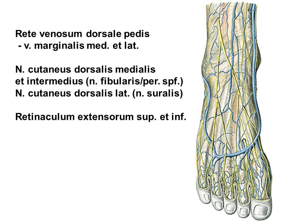 Rete venosum dorsale pedis - v. marginalis med. et lat. N. cutaneus dorsalis medialis et intermedius (n. fibularis/per. spf.) N. cutaneus dorsalis lat