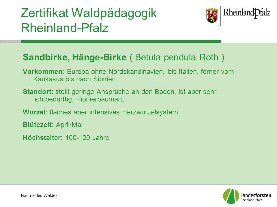 Bäume des Waldes Zertifikat Waldpädagogik Rheinland-Pfalz Sandbirke, Hänge-Birke ( Betula pendula Roth ) Vorkommen: Europa ohne Nordskandinavien, bis