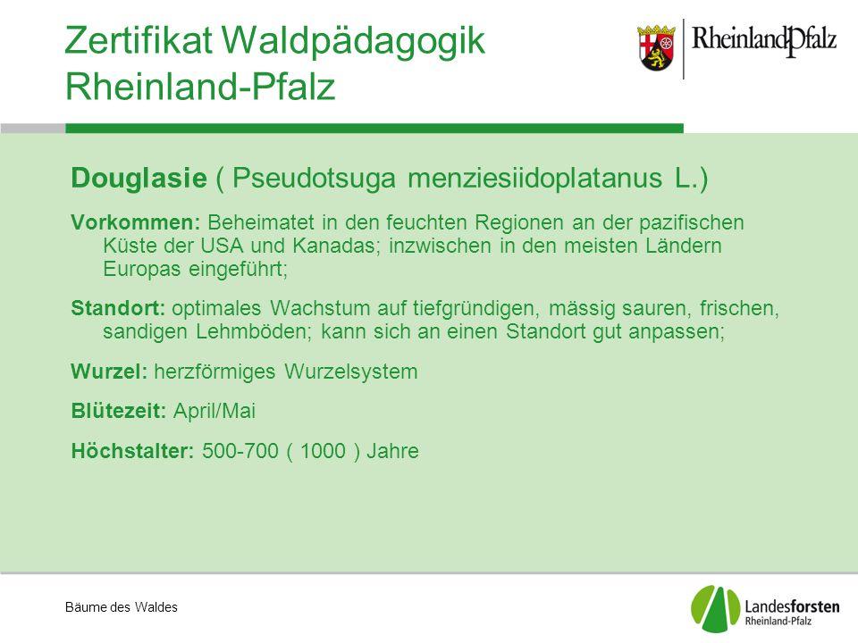 Bäume des Waldes Zertifikat Waldpädagogik Rheinland-Pfalz Douglasie ( Pseudotsuga menziesiidoplatanus L.) Vorkommen: Beheimatet in den feuchten Region