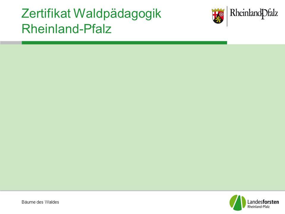 Bäume des Waldes Zertifikat Waldpädagogik Rheinland-Pfalz