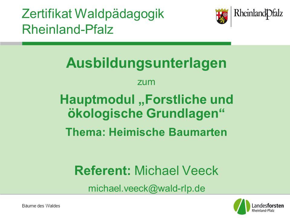 Bäume des Waldes Zertifikat Waldpädagogik Rheinland-Pfalz Buche, Rotbuche (Fagus sylvatika L.) Vorkommen: in ganz Europa außer in nördlichen und östlichen Gebieten, südlich bis Sizilien Standort: Opt.