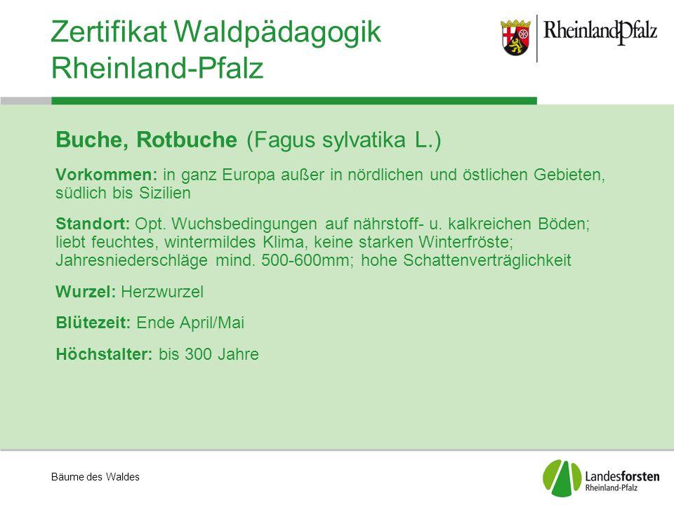 Bäume des Waldes Zertifikat Waldpädagogik Rheinland-Pfalz Buche, Rotbuche (Fagus sylvatika L.) Vorkommen: in ganz Europa außer in nördlichen und östli