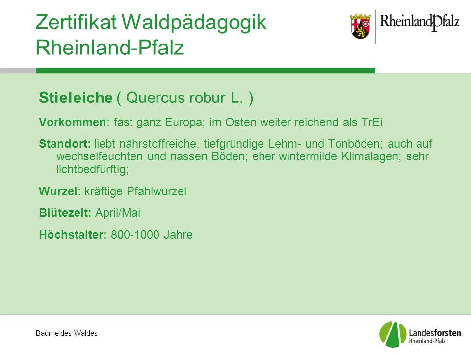 Bäume des Waldes Zertifikat Waldpädagogik Rheinland-Pfalz Stieleiche ( Quercus robur L. ) Vorkommen: fast ganz Europa; im Osten weiter reichend als Tr