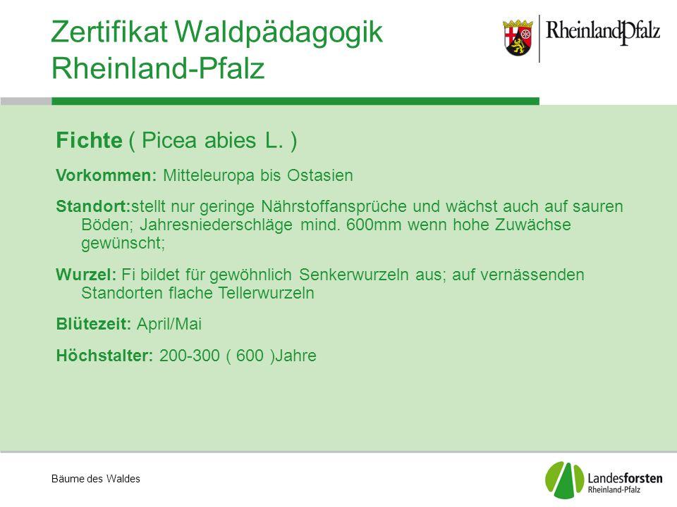 Bäume des Waldes Zertifikat Waldpädagogik Rheinland-Pfalz Fichte ( Picea abies L. ) Vorkommen: Mitteleuropa bis Ostasien Standort:stellt nur geringe N