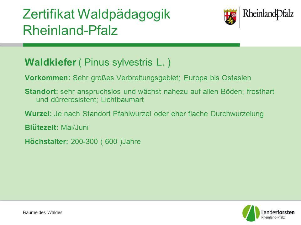 Bäume des Waldes Zertifikat Waldpädagogik Rheinland-Pfalz Waldkiefer ( Pinus sylvestris L. ) Vorkommen: Sehr großes Verbreitungsgebiet; Europa bis Ost