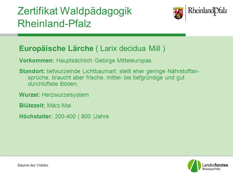 Bäume des Waldes Zertifikat Waldpädagogik Rheinland-Pfalz Europäische Lärche ( Larix decidua Mill ) Vorkommen: Hauptsächlich Gebirge Mitteleuropas Sta