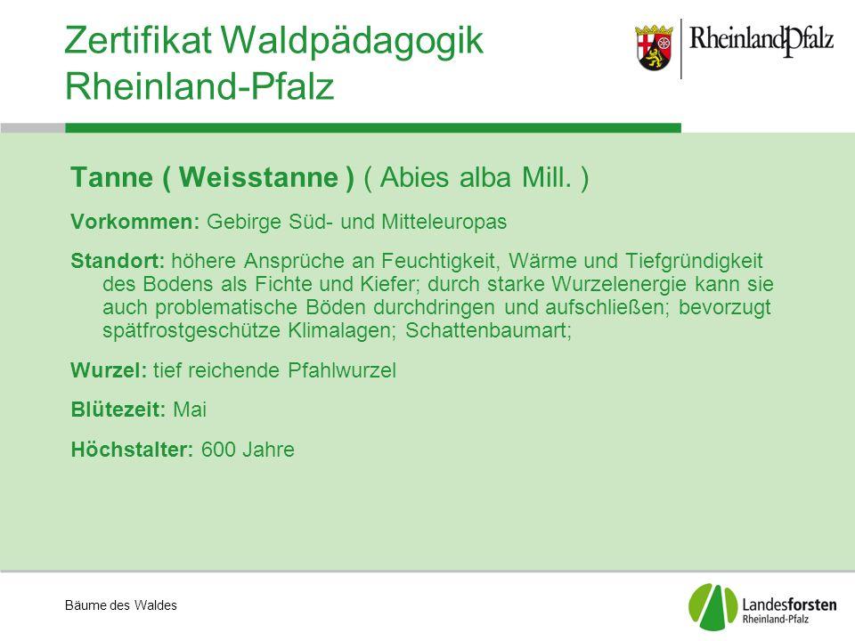 Bäume des Waldes Zertifikat Waldpädagogik Rheinland-Pfalz Tanne ( Weisstanne ) ( Abies alba Mill. ) Vorkommen: Gebirge Süd- und Mitteleuropas Standort