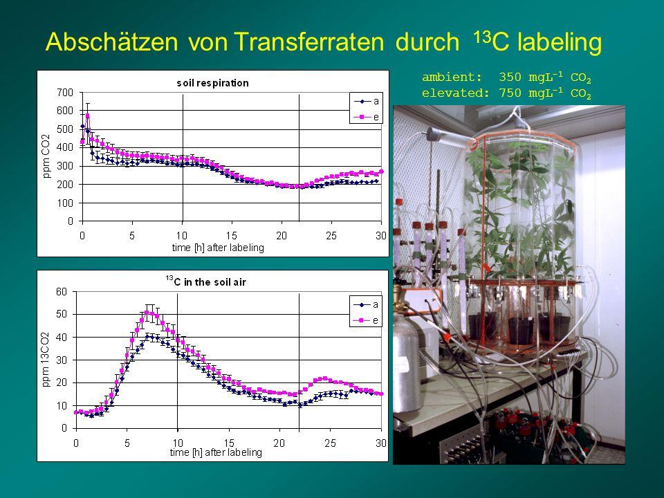 Abschätzen von Transferraten durch 13 C labeling ambient: 350 mgL -1 CO 2 elevated: 750 mgL -1 CO 2
