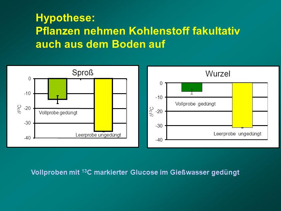 Wurzel -40 -30 -20 -10 0  13 C Vollprobe gedüngt Leerprobe ungedüngt Sproß -40 -30 -20 -10 0  13 C Vollprobe gedüngt Leerprobe ungedüngt Hypothese: