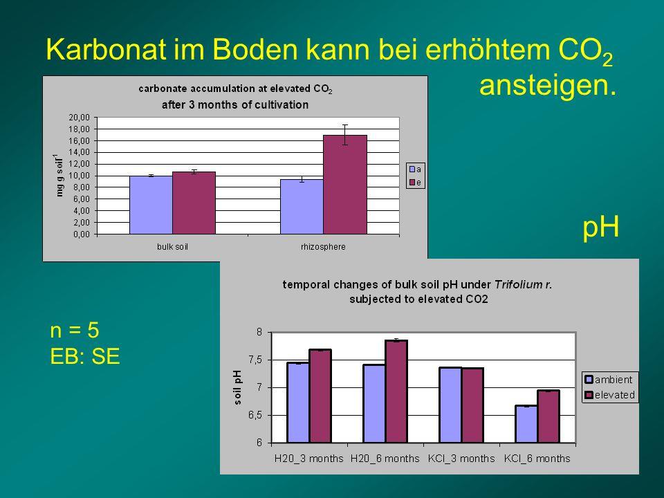 pH Karbonat im Boden kann bei erhöhtem CO 2 ansteigen. after 3 months of cultivation n = 5 EB: SE
