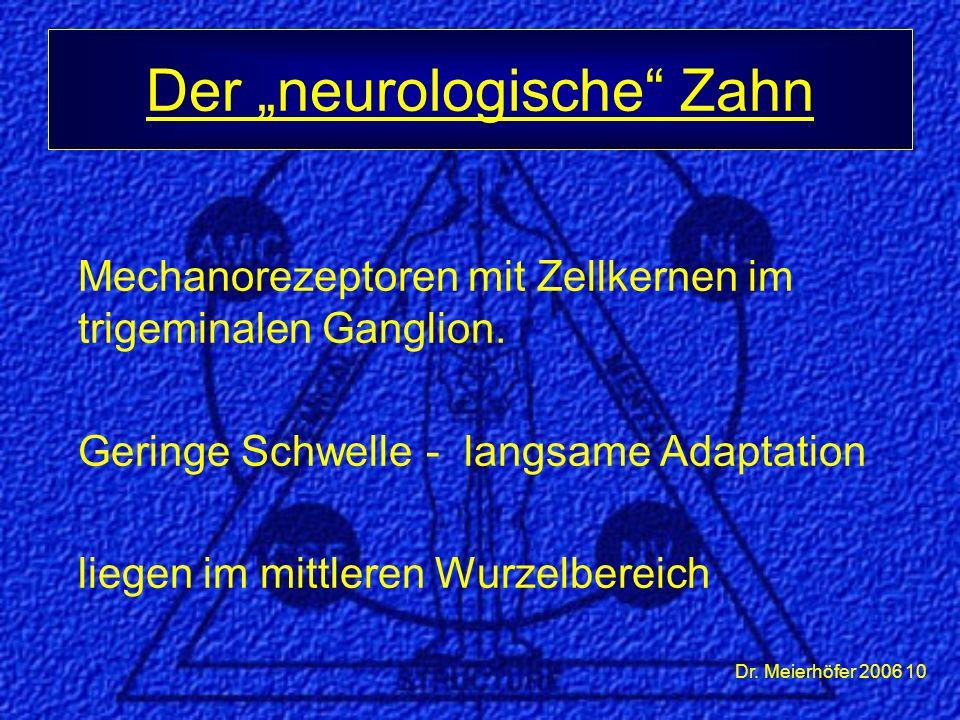 Dr. Meierhöfer 2006 10 Mechanorezeptoren mit Zellkernen im trigeminalen Ganglion. Geringe Schwelle - langsame Adaptation liegen im mittleren Wurzelber