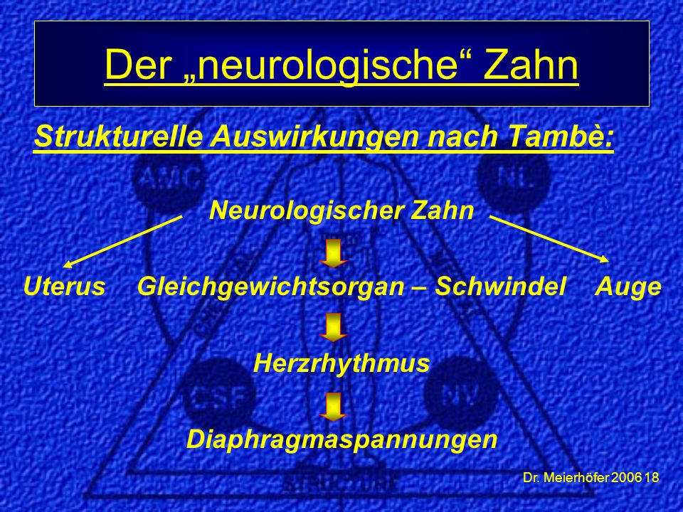 Dr. Meierhöfer 2006 18 Strukturelle Auswirkungen nach Tambè: Neurologischer Zahn Uterus Gleichgewichtsorgan – Schwindel Auge Herzrhythmus Diaphragmasp